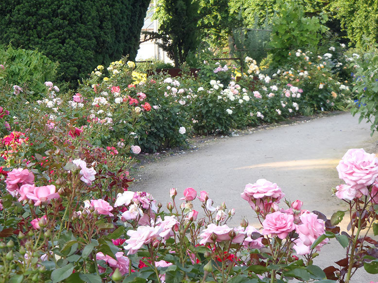 botanischer garten solingen rosengarten. Black Bedroom Furniture Sets. Home Design Ideas