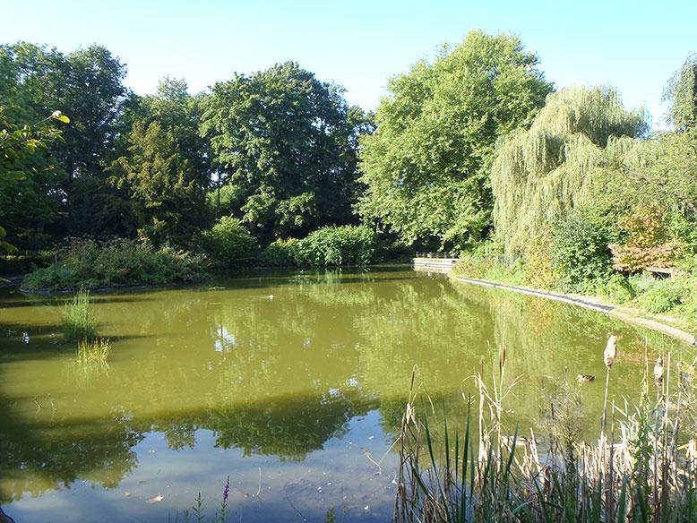 Botanischer garten solingen der teich for Teich garten